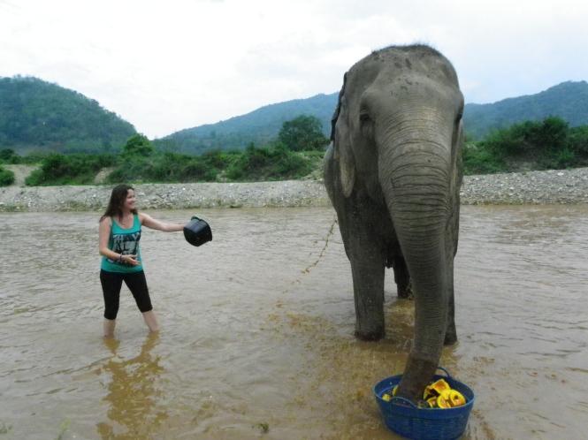 Bañando a un elefante en el Elephant Nature Park. Chiang Mai. Tailandia.