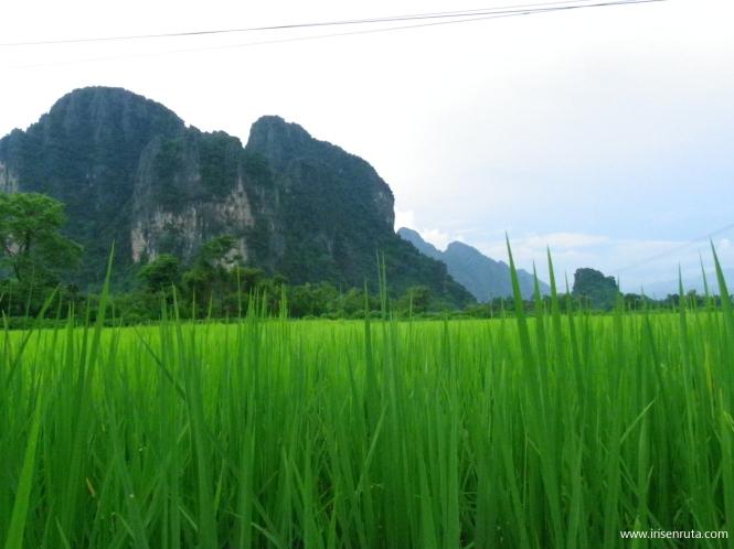 Campos de arroz en Vang Vieng